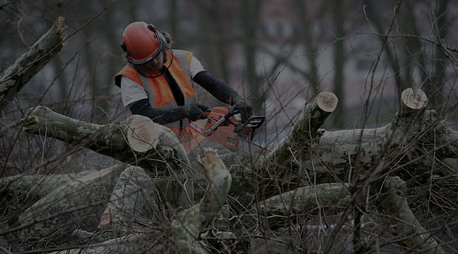 Indianapolis Small Tree Service