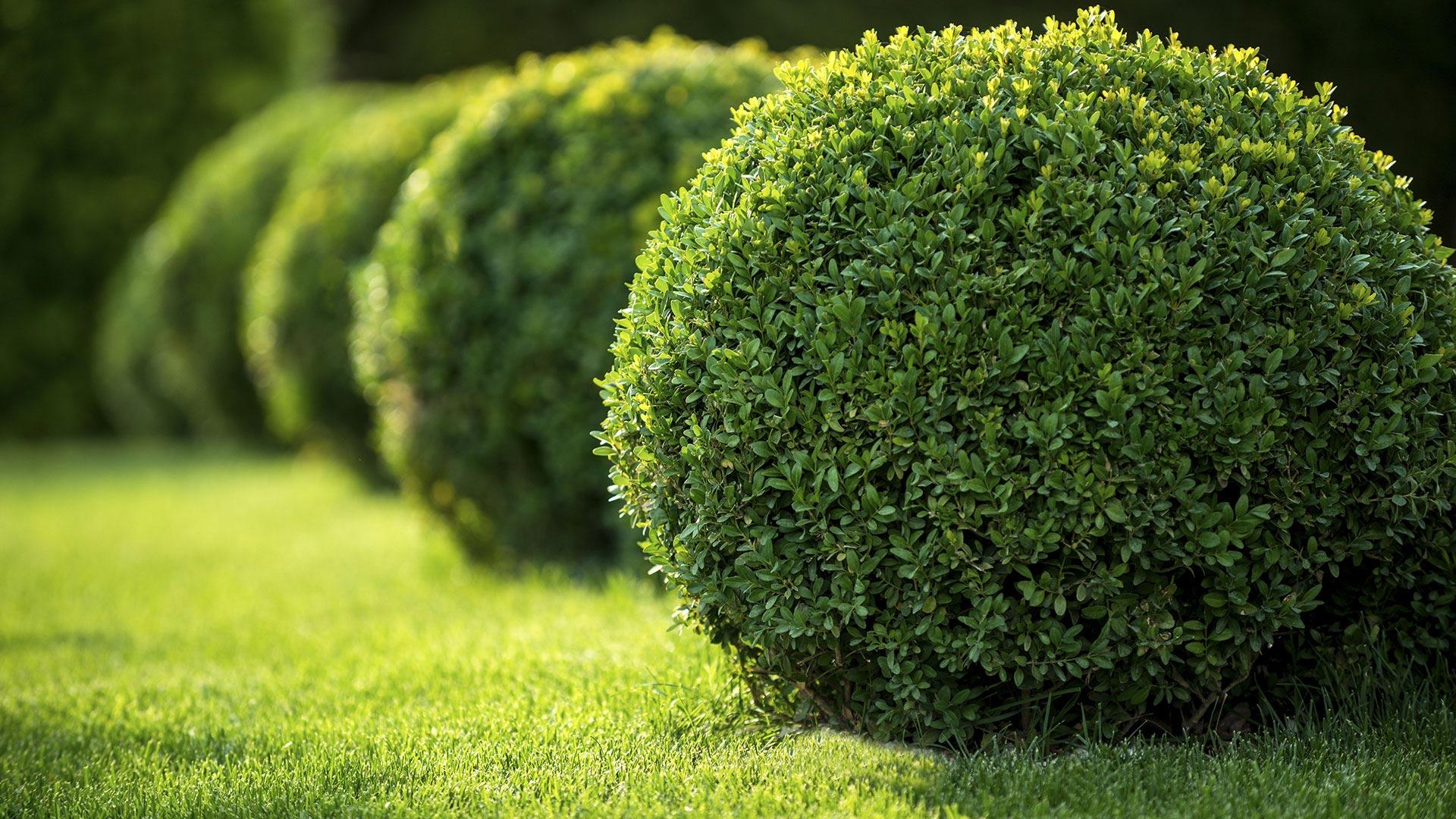 Lejendary Landscape LLC Hardscaping, Landscaping and Outdoor Living slide 1